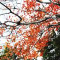 Photos: 紅葉の足跡