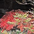 真夜中の紅葉の流れ