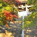 チ紅葉のお寺の階段