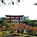 上から見た樽前神社の鳥居と紅葉の始まり