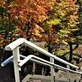 慈照寺の下り階段と紅葉の始まり