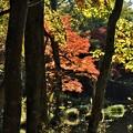 木々の隙間から見える紅葉の始まり