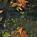 写り鏡~紅葉の始まり