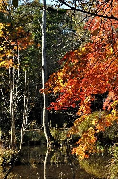 一本枯れ木と紅葉の始まり