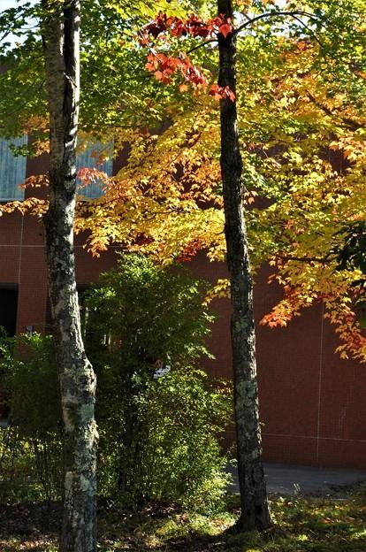 北大研究林事務所前の紅葉の始まり
