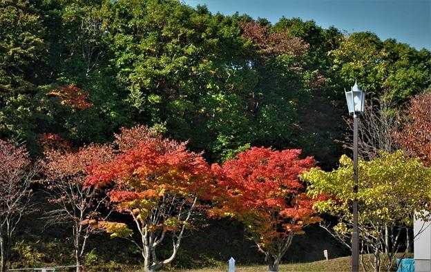 紅葉の始まりと針葉樹