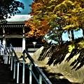 下から見た慈照寺の階段と紅葉の始まり