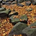Photos: 落ち葉のじゅうたん