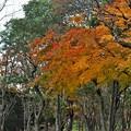 Photos: 垂れ下がる紅葉