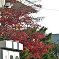 Photos: 名残り秋
