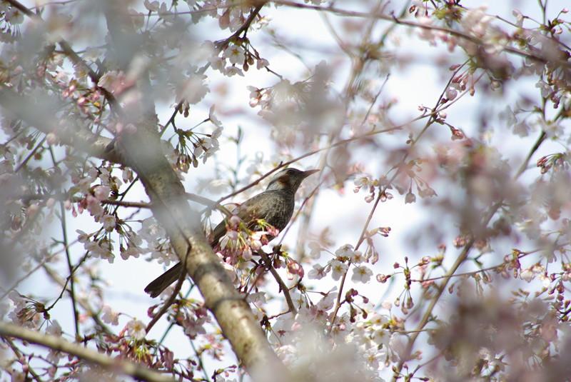 動物たちの春だから(1)