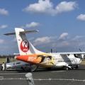 Photos: コウノトリ飛来
