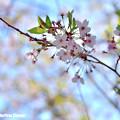 Photos: MEL_0929_01