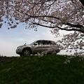 桜とマイカー