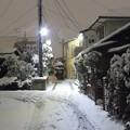 Photos: 2018年1月の大雪