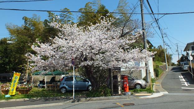 Photos: 鎌倉山 丸ポスト2
