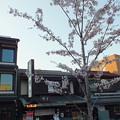 Photos: 鶴岡八幡宮 丸ポスト