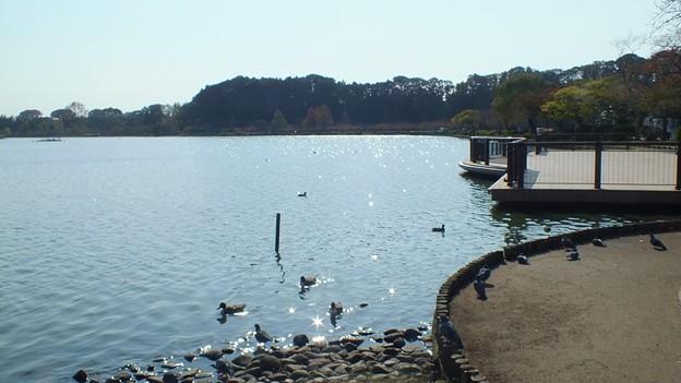 茨城県 水戸市 千波湖