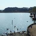 Photos: 茨城県 水戸市 千波湖
