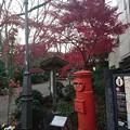 Photos: 静岡県三島市三島楽寿園正門前 丸ポスト