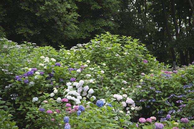2018 06 万博記念公園0081
