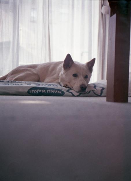 犬の目線で