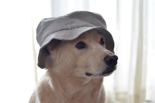 写真: 帽子