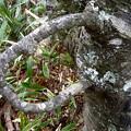 Photos: 取っ手付木