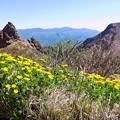 Photos: 磐梯山のお花畑