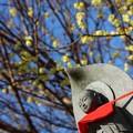 写真: ~春まだき~