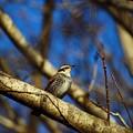 Photos: ~鳥馬~