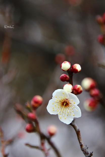 Photos: ~鶯ボール~