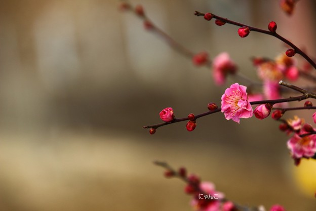 写真: ~早春賦~