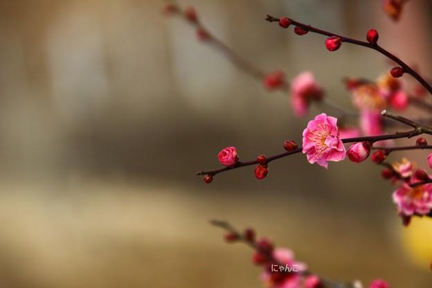 Photos: ~早春賦~