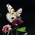 写真: ~花から花へと~