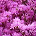 写真: ~春の色~