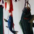 写真: ~リアルな鯉のぼり~