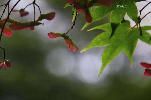 Photos: ~何処まで飛ぼうか~