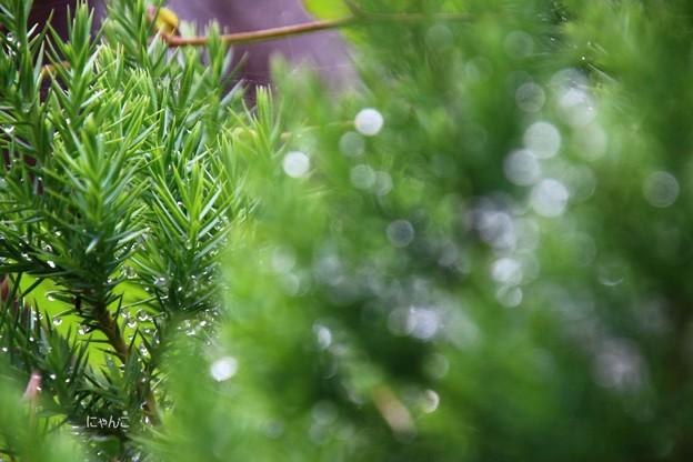 写真: ~雨上がりに~