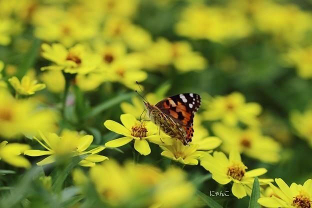 Photos: ~お花畑で見る夢は~