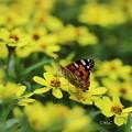 写真: ~お花畑で見る夢は~