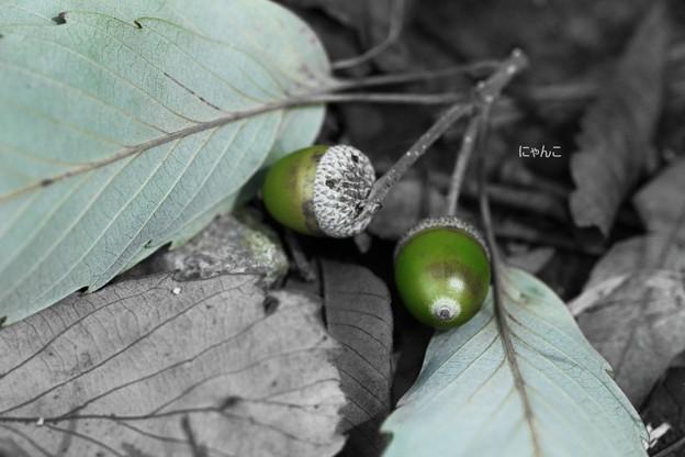 写真: ~秋の気配~
