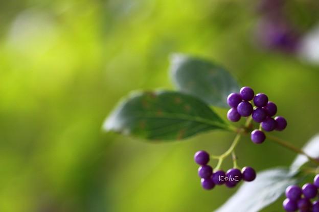 ~紫色の風~