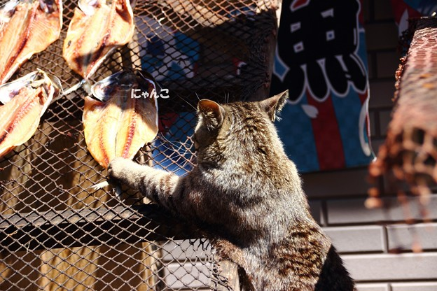 Photos: ~お魚咥えた・・・~