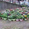 Photos: にわか花園