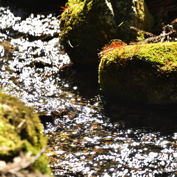 日吉大社の輝く水路