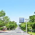 写真: 日吉大社の前から