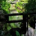地蔵川の緑陰