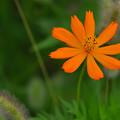 写真: 夕暮れの花