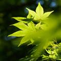 写真: 緑濃く